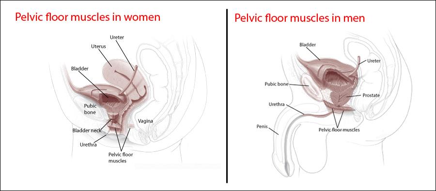 Kegel Muscles